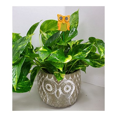 8_in_Cement_Owl_Planter_with_Owl_Pick_(Assorted_Colors)_-_34.99